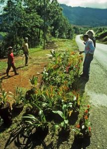 Orkidéer vid vägen